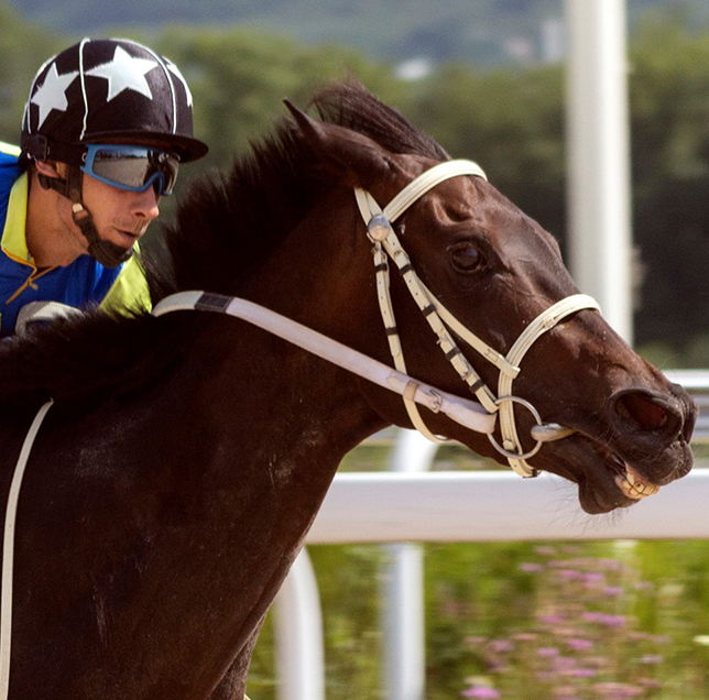 Equiade-horse-supplements-for-racing-horses-square