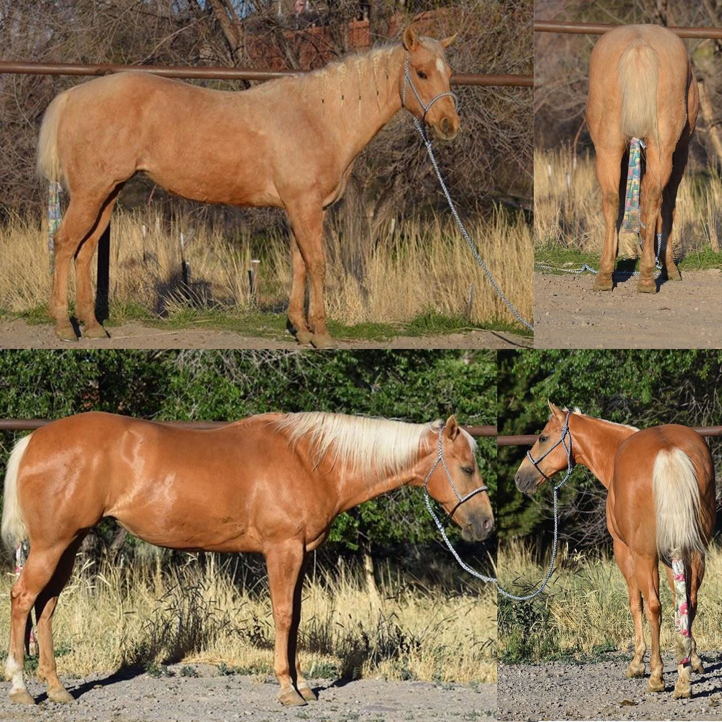 Before-and-after-horse-square