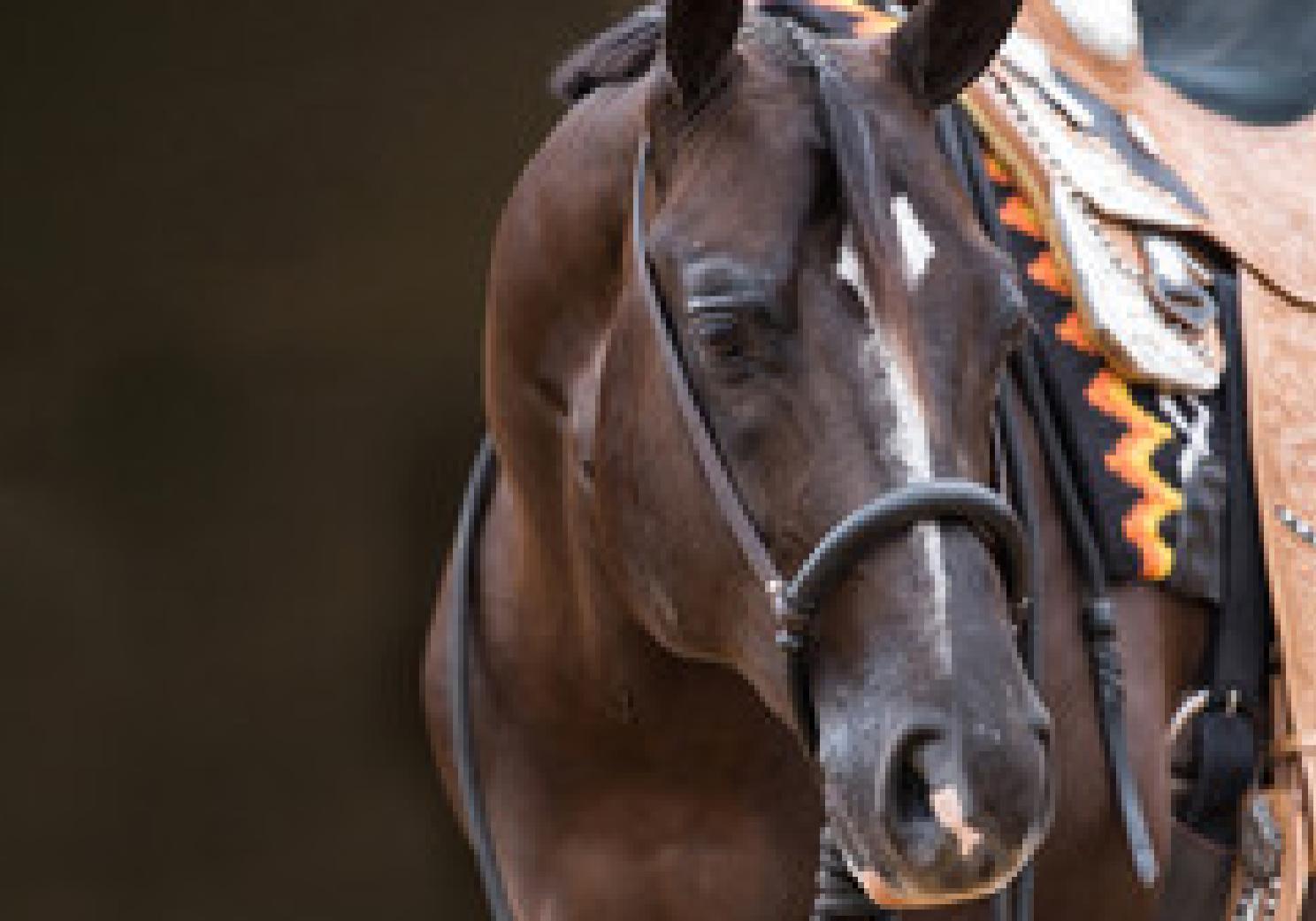 horse-rider03-landscape